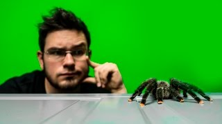 200 tarantulas at home