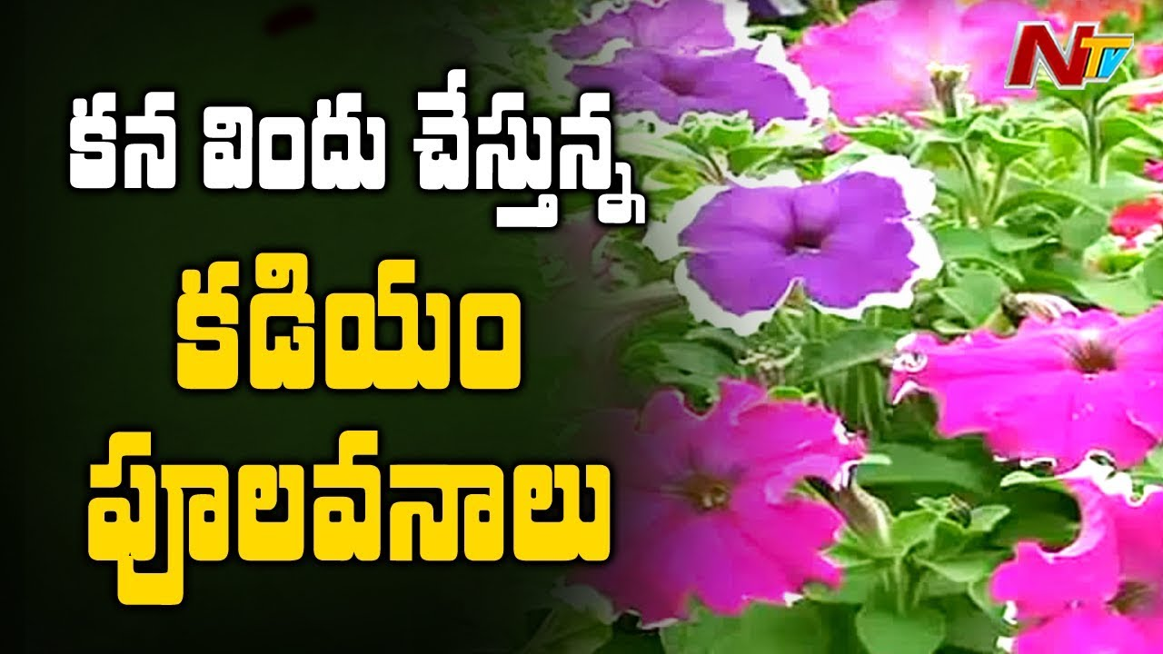This town is famous for flowers in east godavari