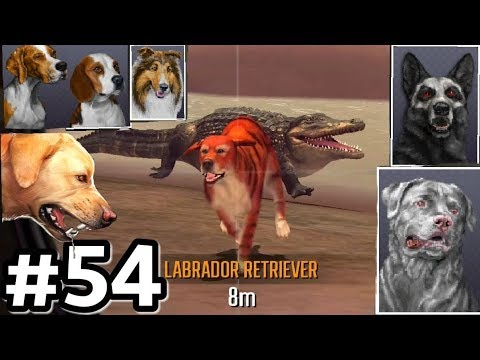 Hunting With All Dogs In Australia! Deer Hunter 2017 Ep54