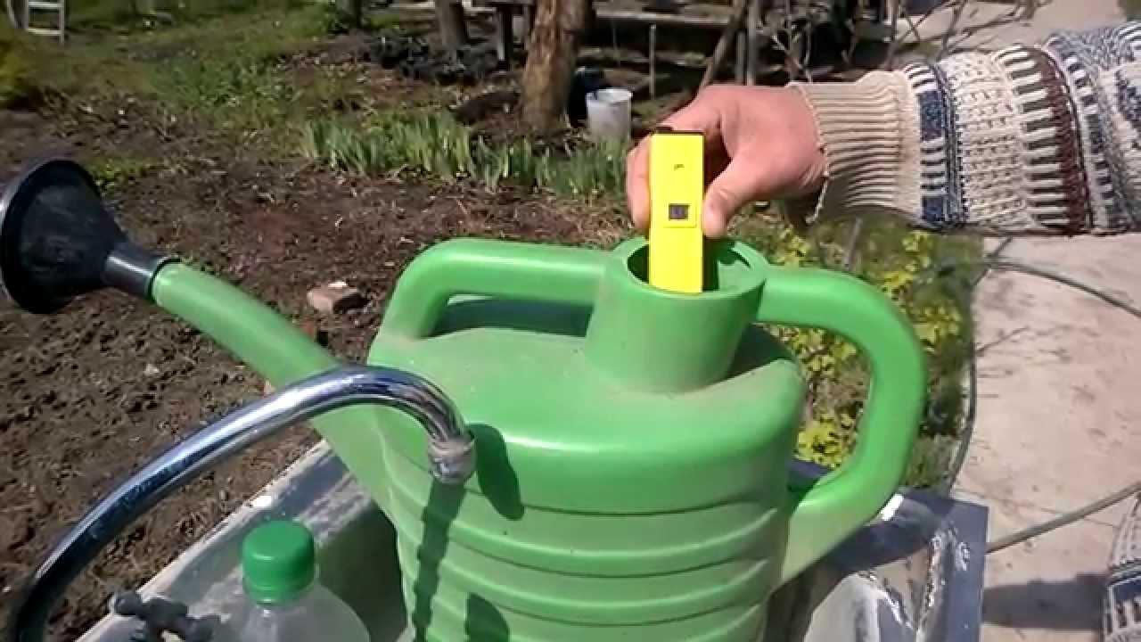 полив голубики,+как часто поливать голубику,+как поливать голубику лимонной кислотой+фото