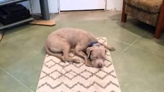 Bentley's Good Dog Makeover!