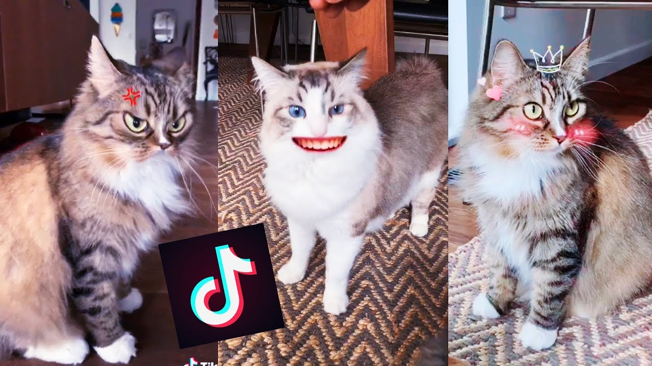 My Cats Try Tik Tok For The First Time Youtube