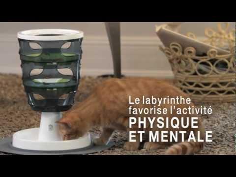 JEUX POUR CHATS CAT IT SENSES