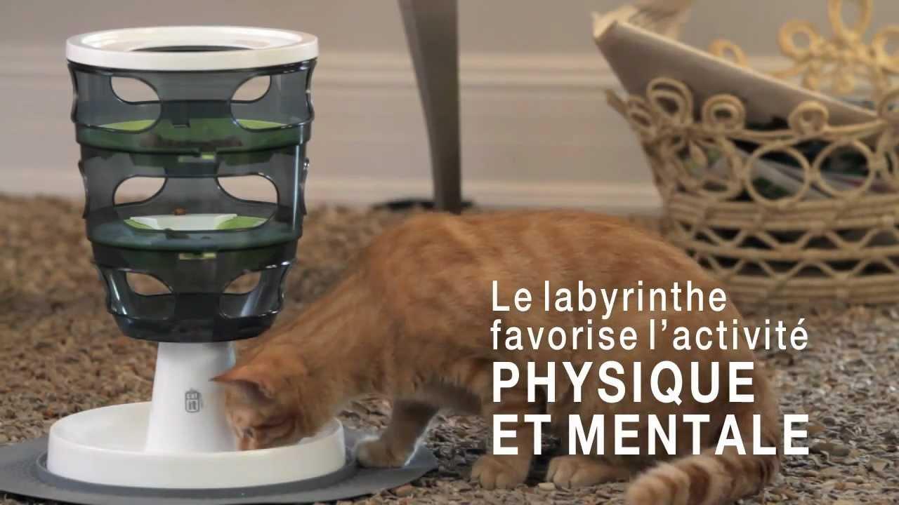 jeux pour chats cat it senses youtube. Black Bedroom Furniture Sets. Home Design Ideas