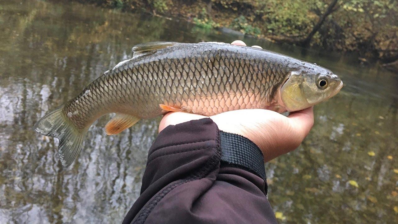 Pescuit la clean cu gume   18 noiembrie 2020
