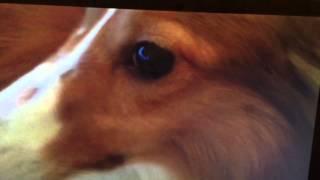 食神再歸位 The Pug Files《x File Of 飛仔》