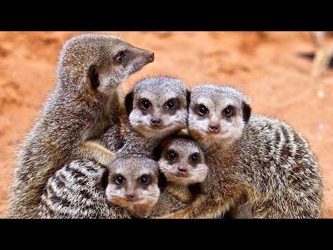 Семья — это жизнь!  Уникальные кадры из мира животных.