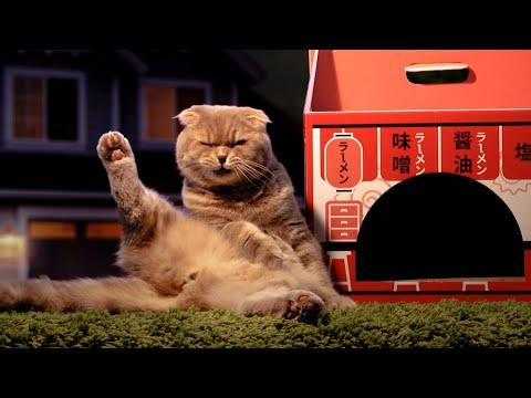 고양이들의 심야식당 - 수리노을 더 무비