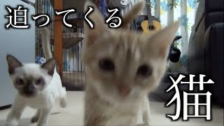 うちの猫キッチンに立ったら餌タイムって覚えました thumbnail