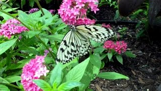 Inside Butterfly House At Callaway Gardens