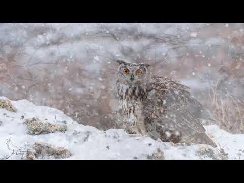 'Amor bajo la nieve'... pese a Filomena