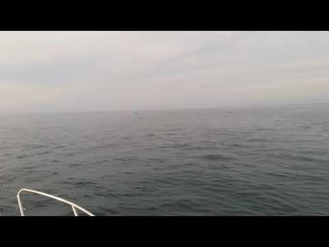 Реальный дельфинарий (Севастополь,16.04.2018)