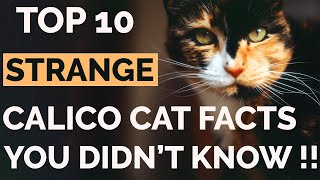 Top 10 Calico Cat Facts That Will Amaze You !! | Calico Cat Personality