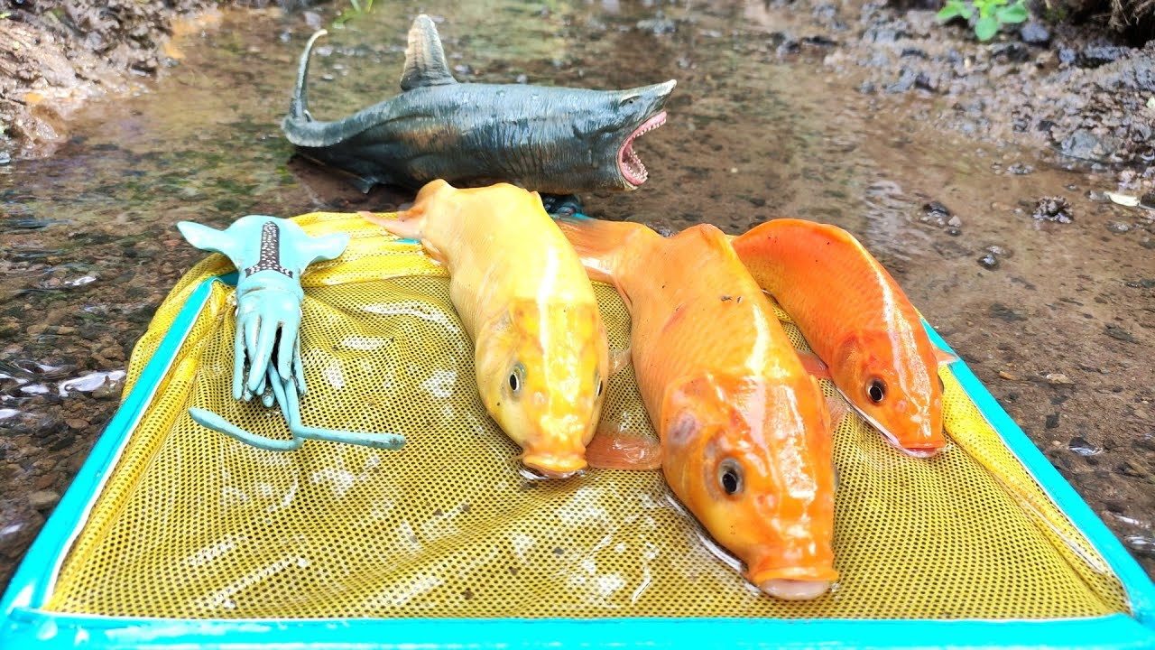 Catching Real Carp In the river, Eels, Sharks, Lobster, Crab, Squid [Part526]