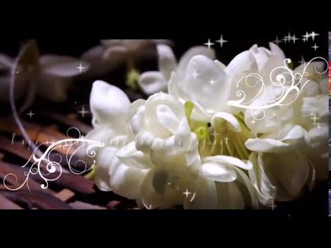 Sampaguita (Kundiman Song) by:  Mabuhay Singers