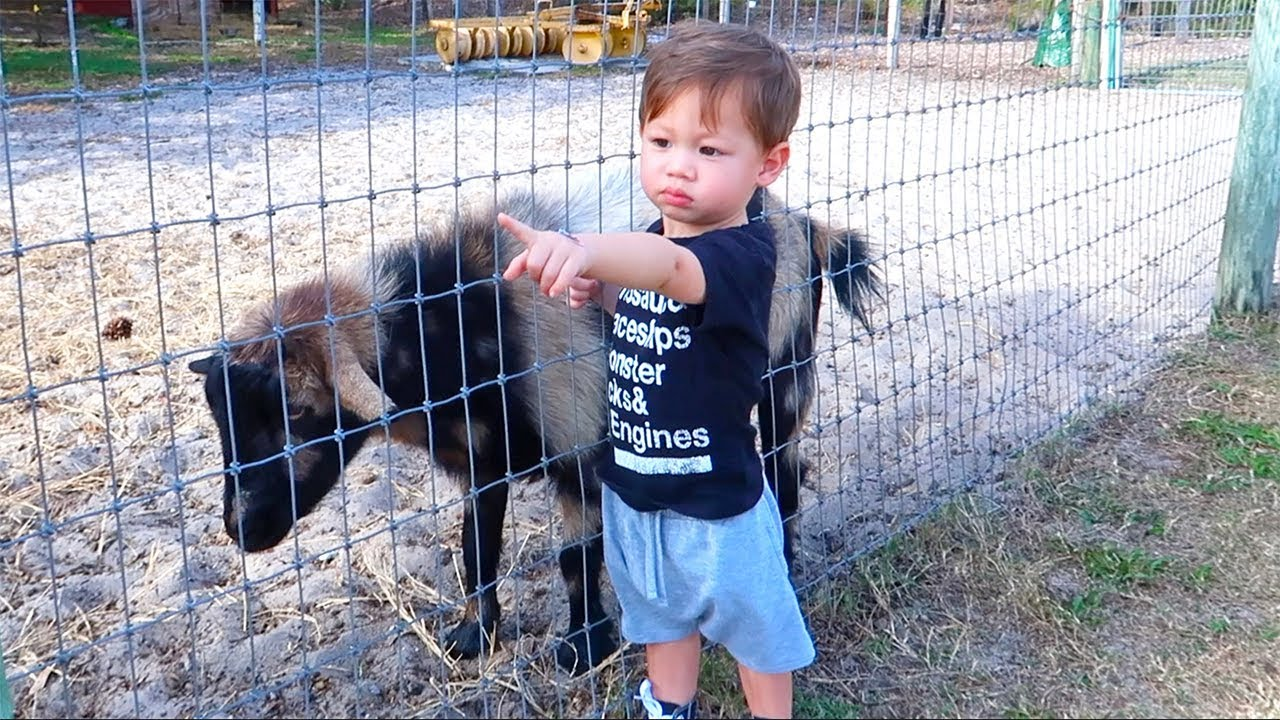 will-they-get-along-baby-vs-goat