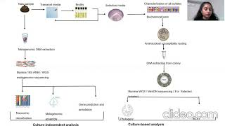 Investigation into prevalence of multi-drug resistant zoonotic pathogens from wild birds faeces...