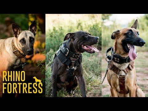 Rhino Fortress: Meet The Anti-poaching Dogs