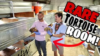 100 Rare EXPENSIVE Tortoises all in ONE Room!