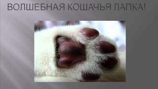 Волшебная кошачья лапка