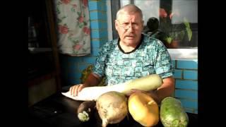 Дайкон ДРАКОН