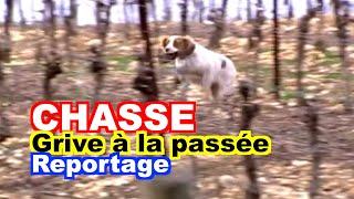 CHASSE : Chasse de la grive à la passée