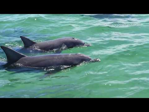 Australia 2017 - Swimming with dolphins and sea lions in Baird Bay