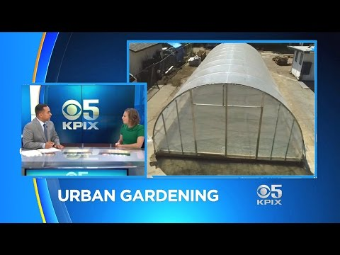 At Issue: Urban Agriculture