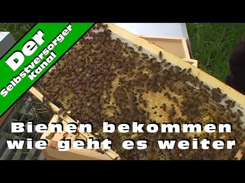 Bienen bekommen wie geht es weiter