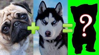 จะเกิดอะไรขึ้นหากนำสุนัข 15 สายพันธุ์สุดน่ารักมาผสมพันธุ์กัน(สัตว์โลก)