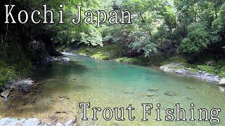 【Japan】Trout Fishing Mountain Stream River Amago(redspotted Masu Salmon)!Lure Fishing【高知 渓流釣り アマゴ】