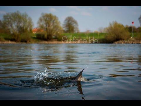 Een mooie lentedag - Korstvissen op winde