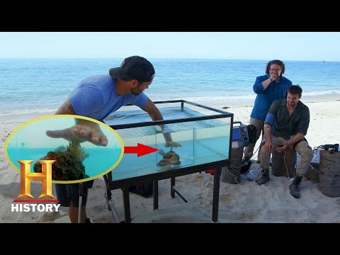 BRUTAL SCORPIONFISH STING | Kings Of Pain (Season 1) | History