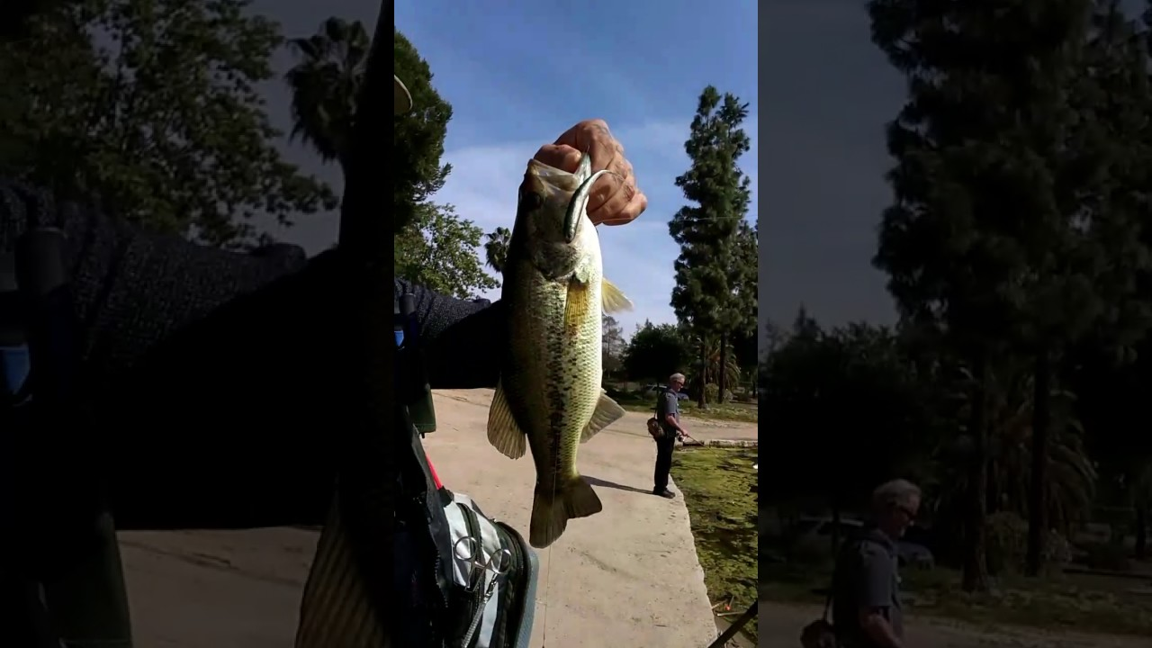 Socal bass fishing spawning season 6 in one day not nad for Bass fishing season
