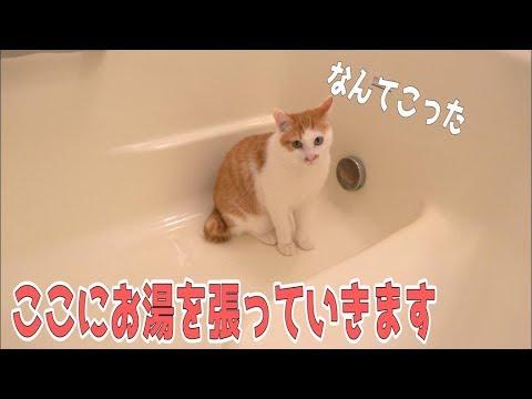 バスタブに猫がいたのでそのままお湯を張ってみます。