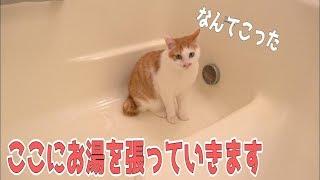 お風呂での猫たちは大体面白い ・サブチャンネルの登録お願いします! h...
