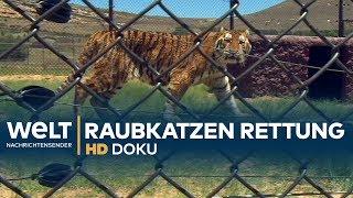 RAUBKATZEN - Zirkus-Tiere auf dem Weg in die Freiheit | HD Doku