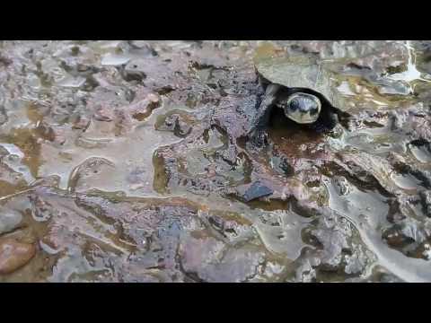 Amazing  Tortoise ( വിചിത്രമായ ആ മ)