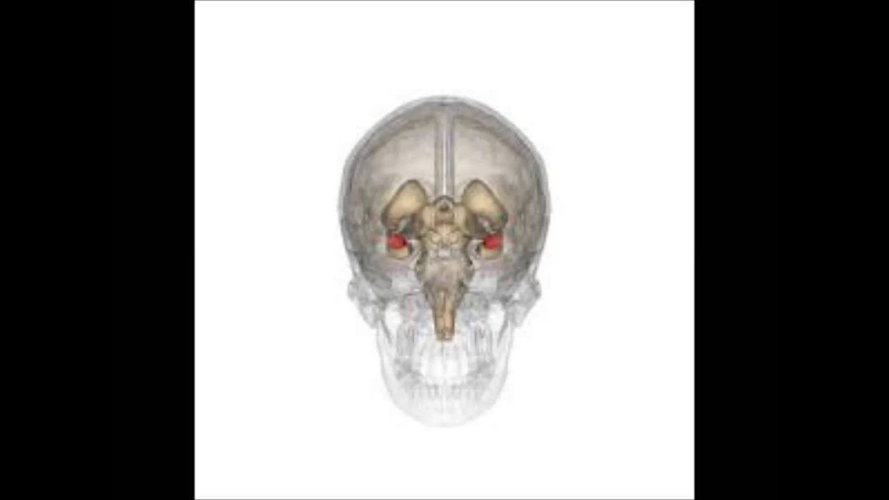 daniel goleman anatomia de un asalto emocional - YouTube