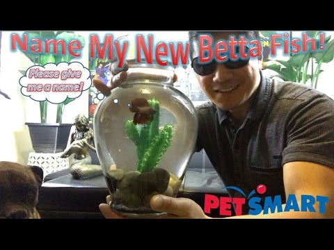 Name My New Beta Fish! | Petsmart Betta Fish Review!