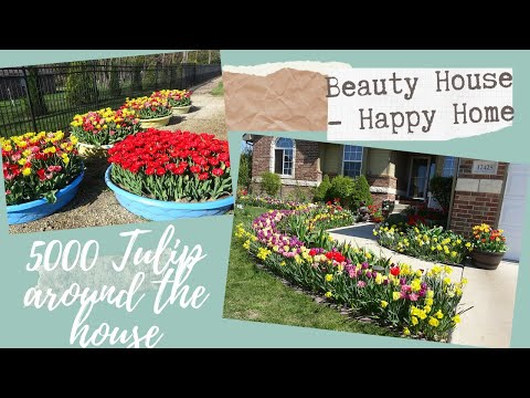 Tulip house you