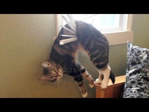 Nothing will make you laugh harder than funny animals - Funny animal compilation