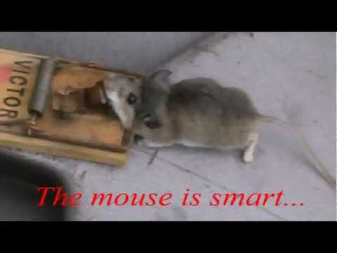 Use the Ultimate Bait to catch mice!