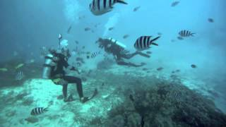 Okinawa Diving: Sea Life