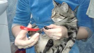 Как постричь когти кошке