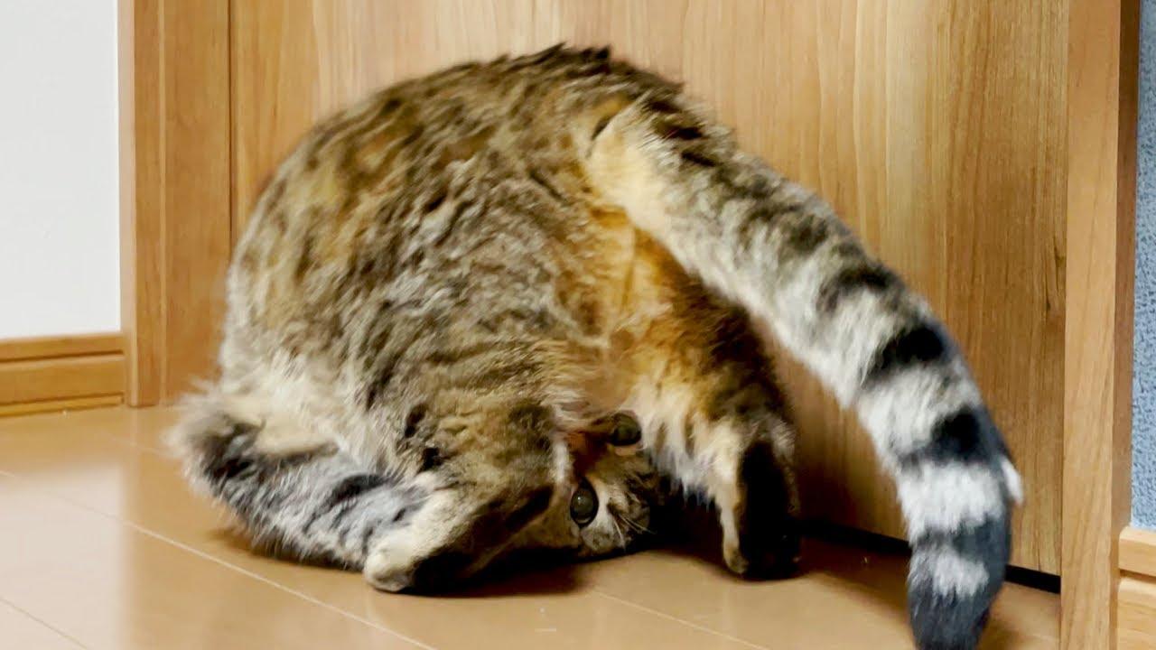 飼い主の手を匂って興奮しすぎた猫がこちら!