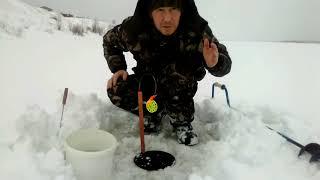 Рыбалка на жерлицы в марте  Налим