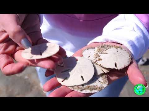 Sand Dollar Island | Beaufort North Carolina