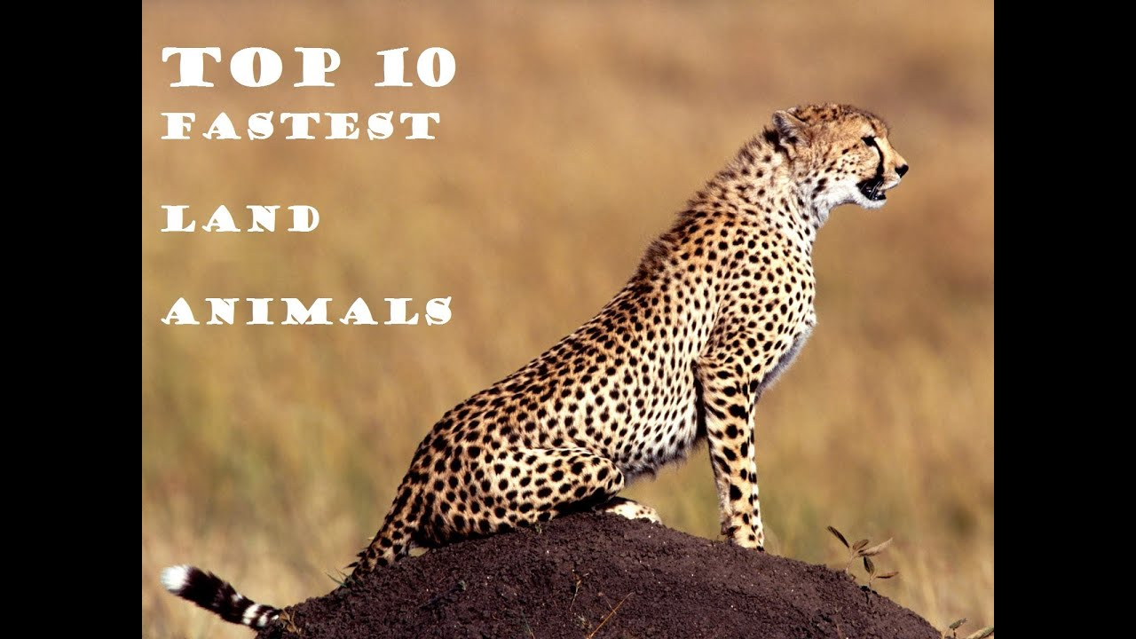 Top 10 Fastest Land Animals in the world - YouTube