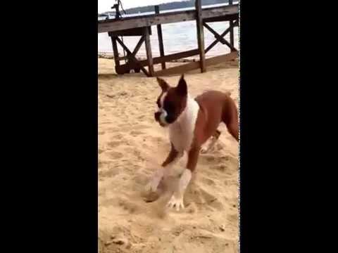 Dog Eats Lemon And Goes Crazy Youtube